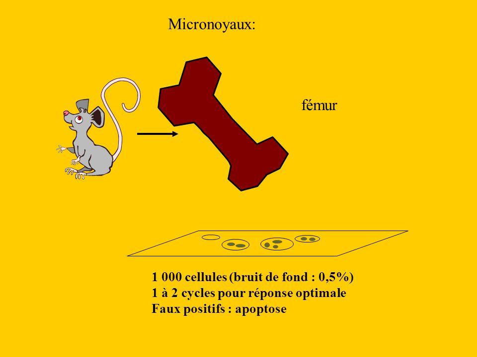 Micronoyaux: fémur 1 000 cellules (bruit de fond : 0,5%)