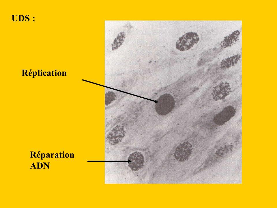 UDS : Réplication Réparation ADN