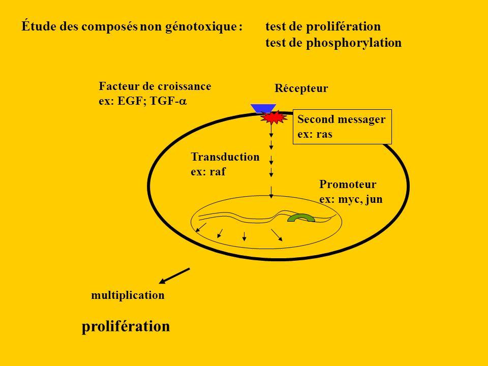 Étude des composés non génotoxique :. test de prolifération