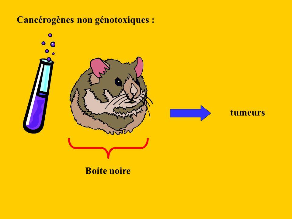 Cancérogènes non génotoxiques :