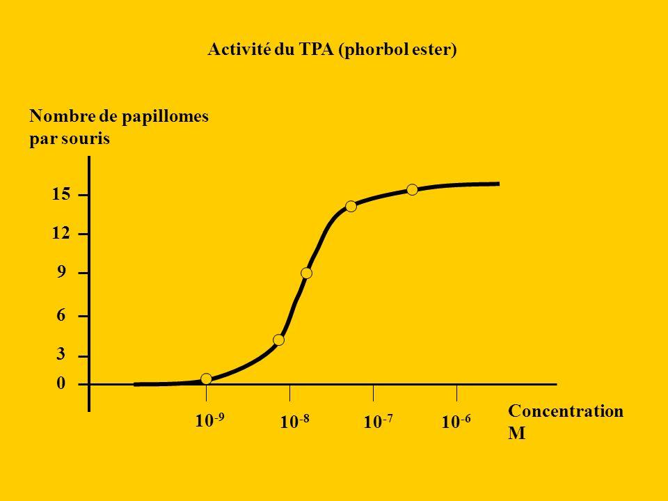 Activité du TPA (phorbol ester)