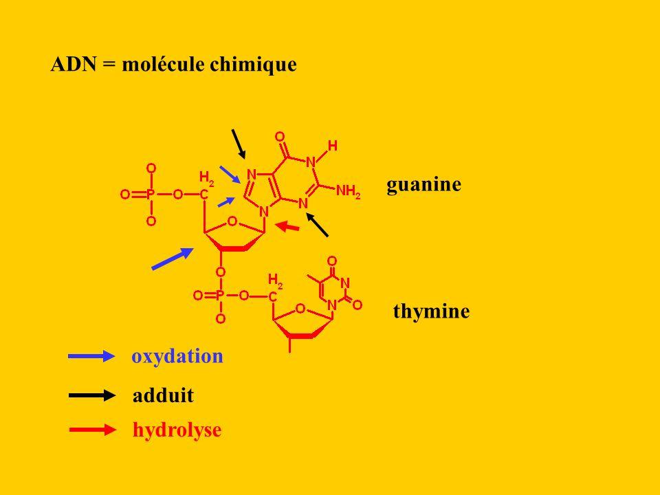 ADN = molécule chimique
