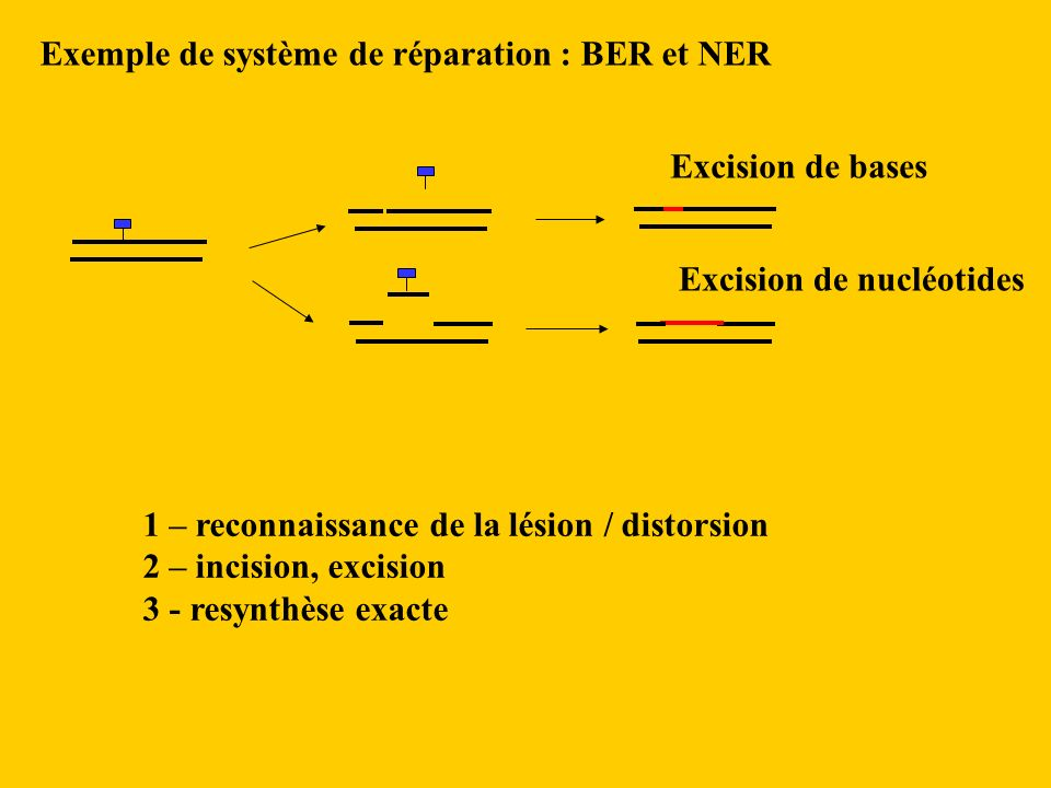 Exemple de système de réparation : BER et NER