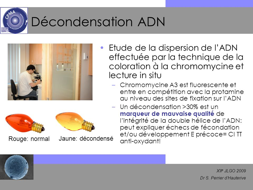 Décondensation ADN Etude de la dispersion de l'ADN effectuée par la technique de la coloration à la chromomycine et lecture in situ.