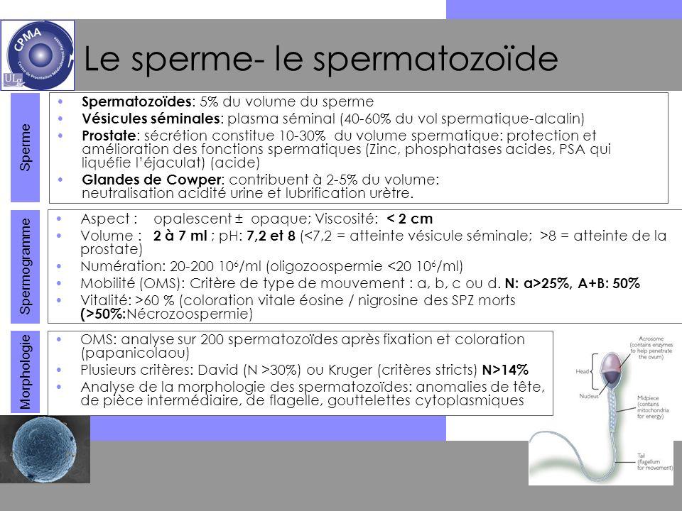 Le sperme- le spermatozoïde