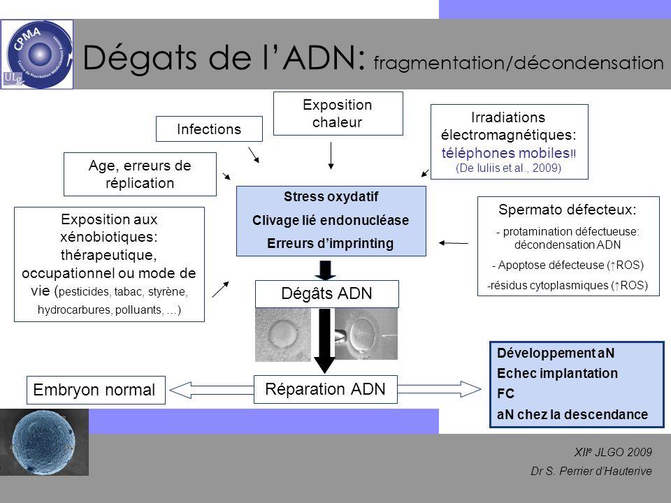 Dégats de l'ADN: fragmentation/décondensation