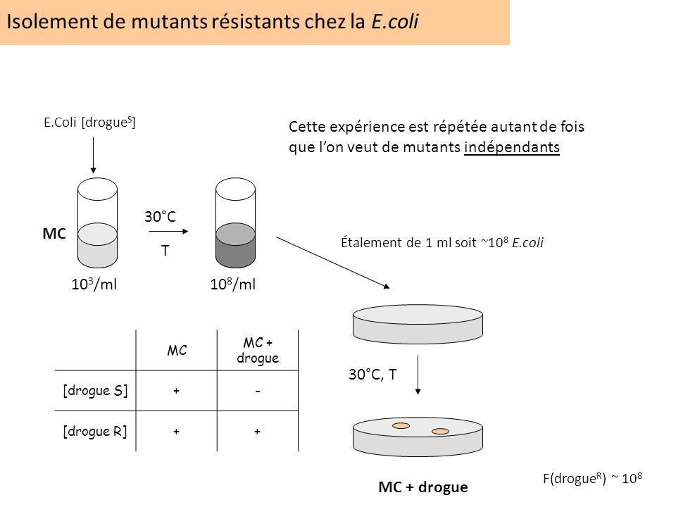 Isolement de mutants résistants chez la E.coli