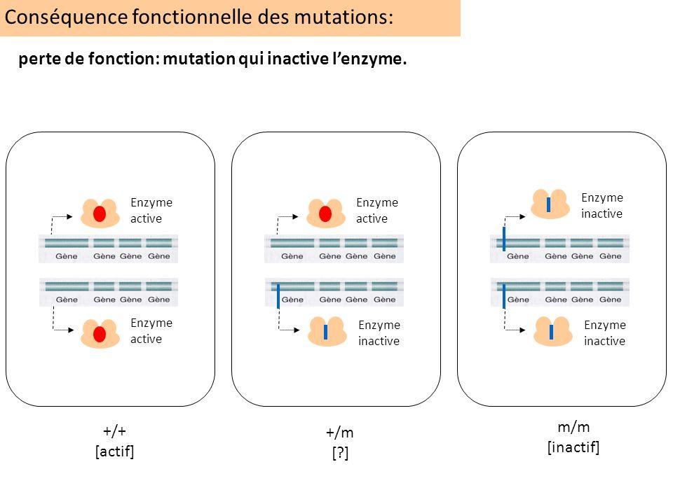 Conséquence fonctionnelle des mutations: