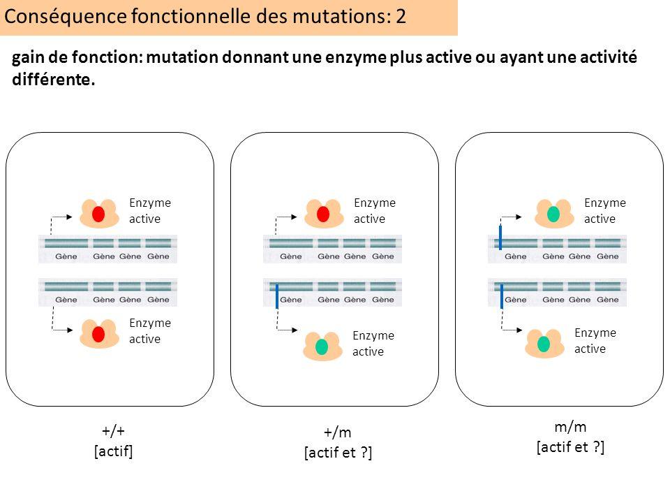 Conséquence fonctionnelle des mutations: 2