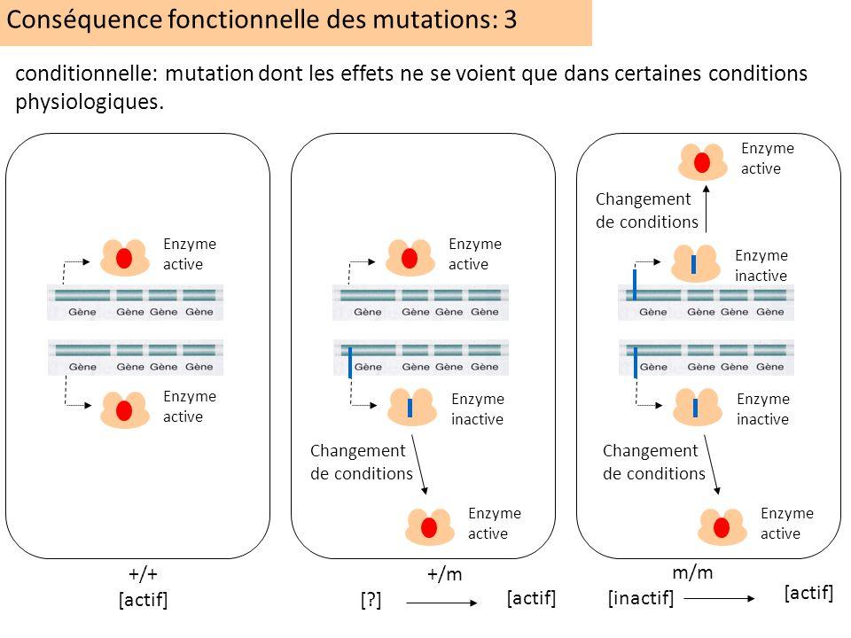 Conséquence fonctionnelle des mutations: 3