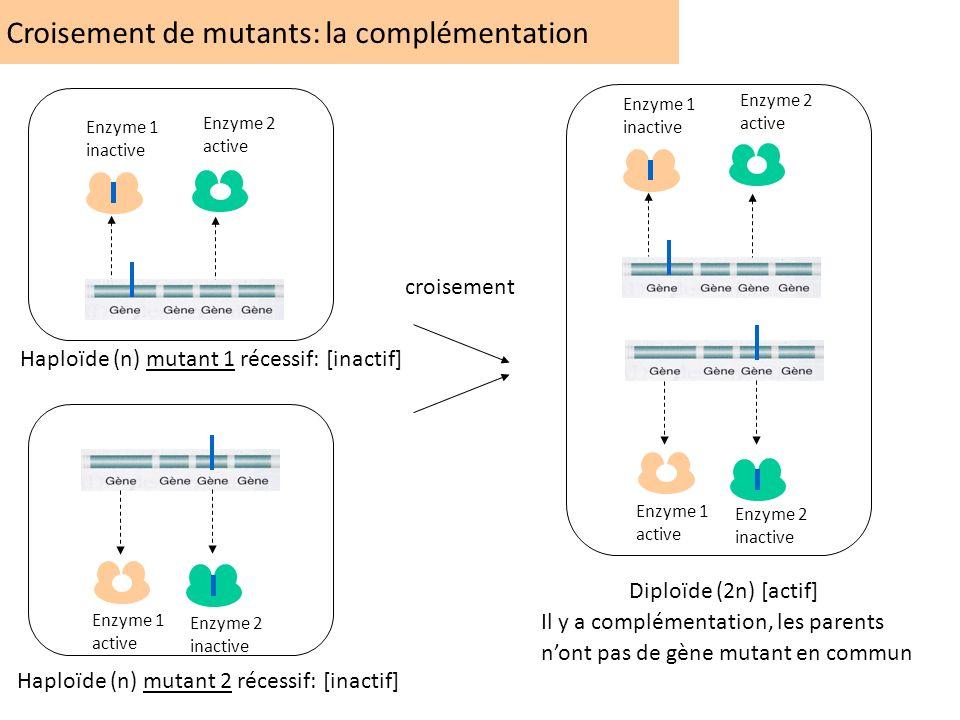 Croisement de mutants: la complémentation