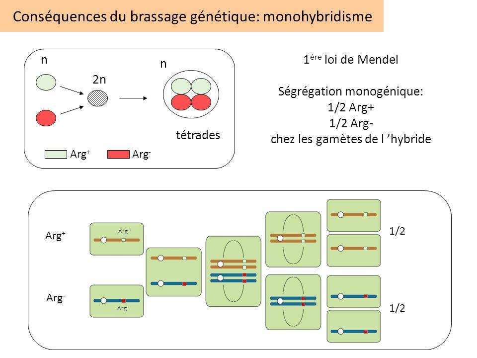Conséquences du brassage génétique: monohybridisme