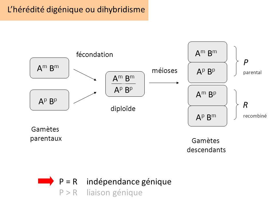 L'hérédité digénique ou dihybridisme