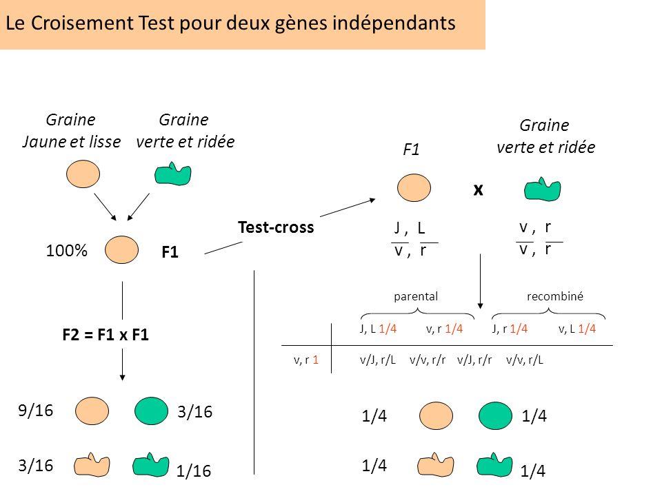 Le Croisement Test pour deux gènes indépendants