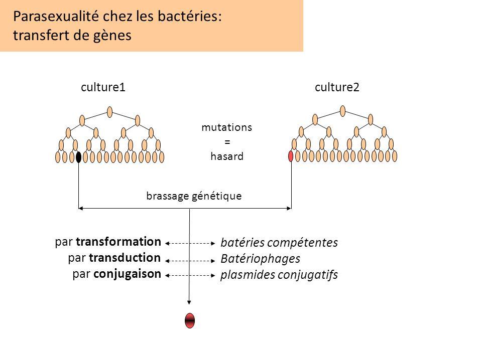 Parasexualité chez les bactéries: transfert de gènes