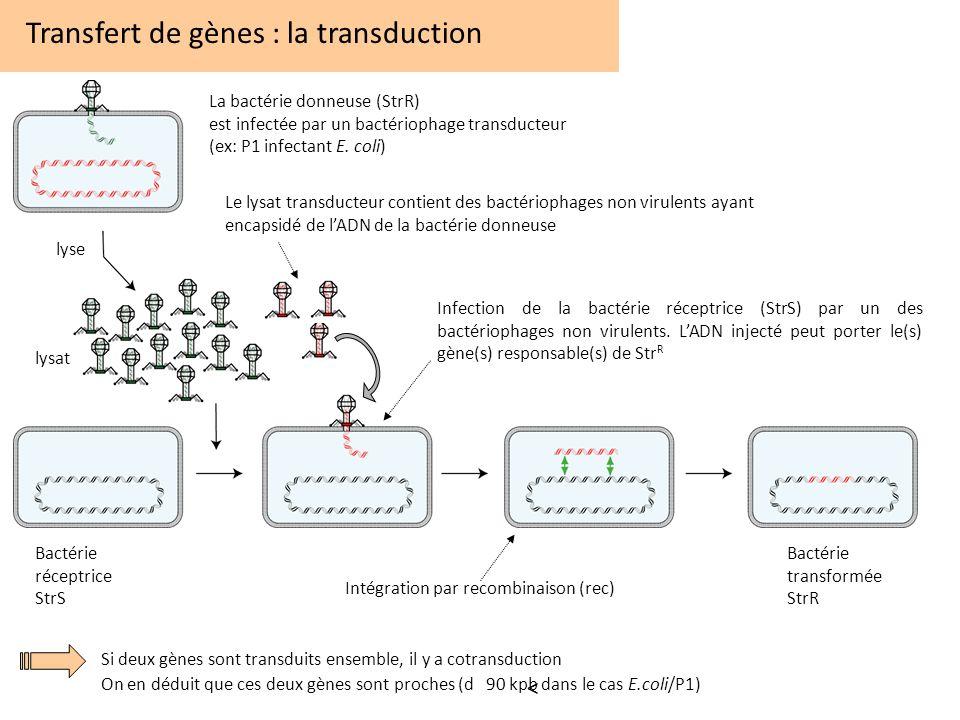 Intégration par recombinaison (rec)