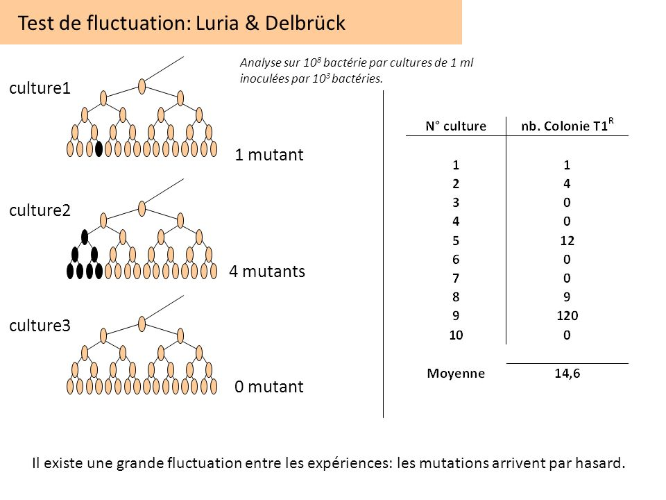 Test de fluctuation: Luria & Delbrück