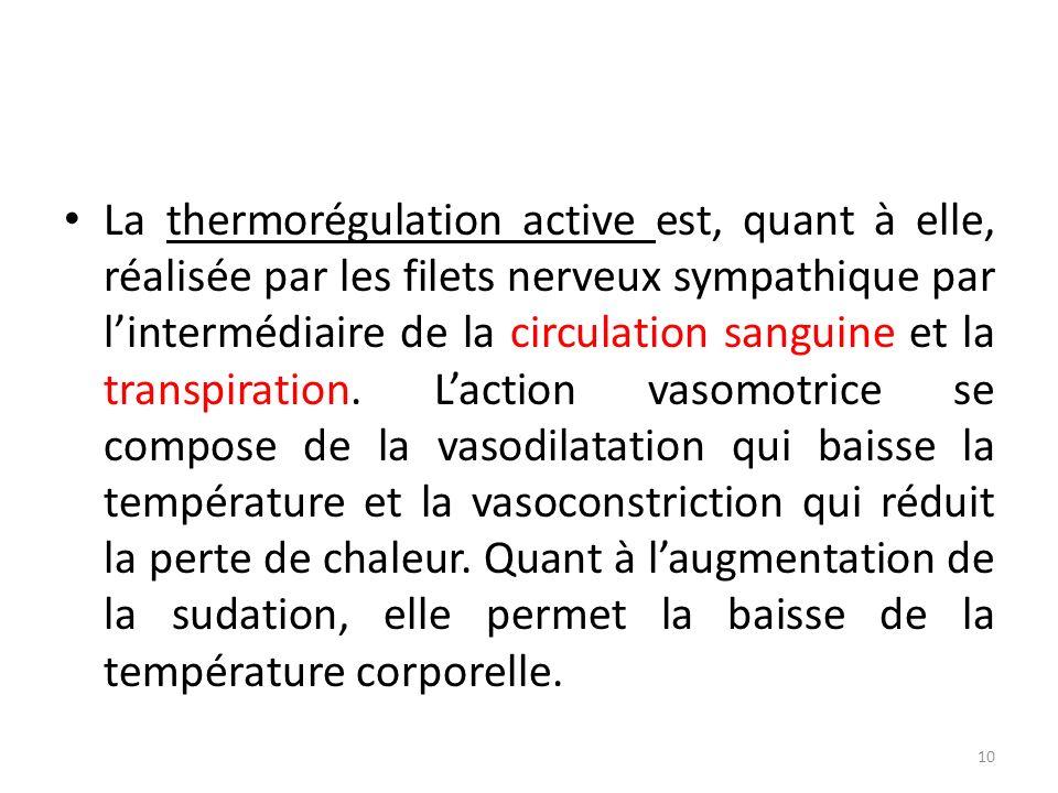 La thermorégulation active est, quant à elle, réalisée par les filets nerveux sympathique par l'intermédiaire de la circulation sanguine et la transpiration.