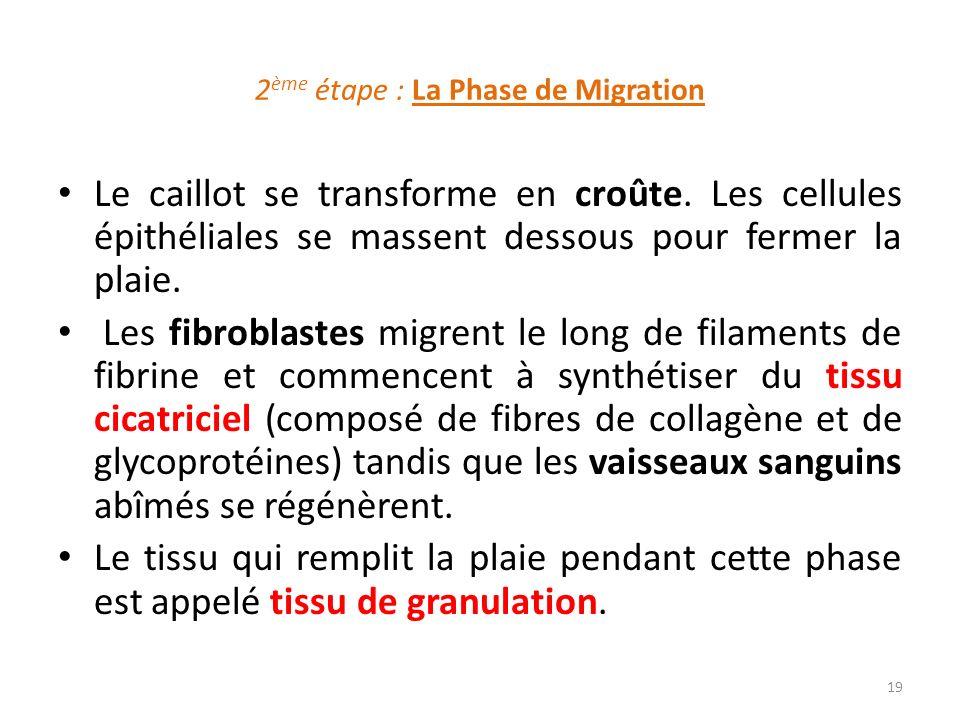 2ème étape : La Phase de Migration