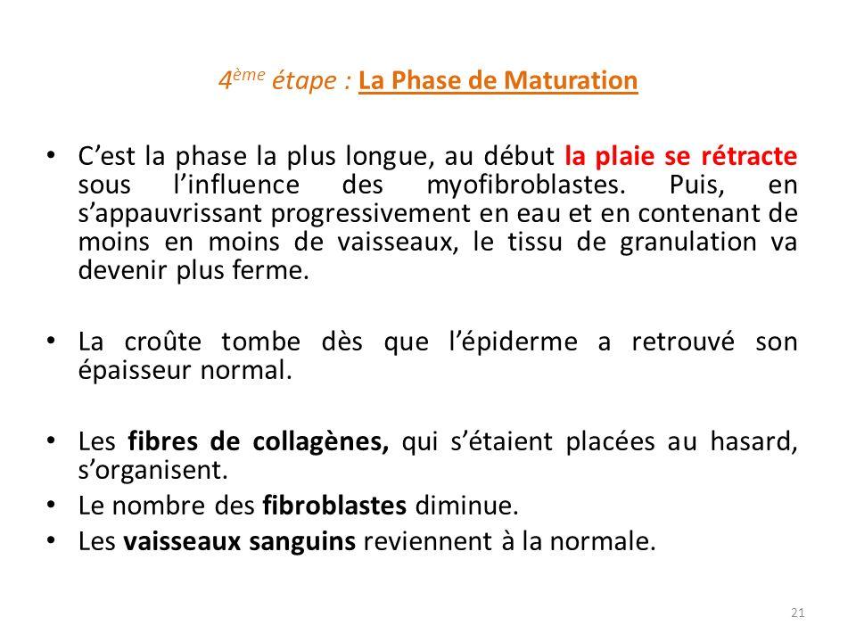 4ème étape : La Phase de Maturation