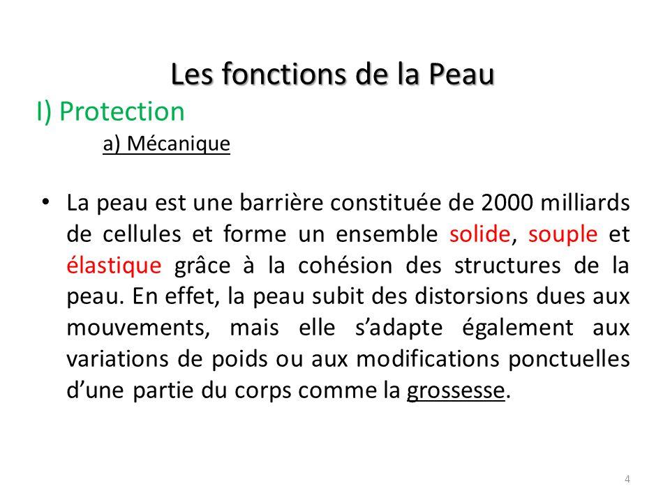 Les fonctions de la Peau I) Protection a) Mécanique
