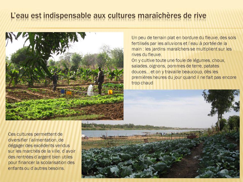 L'eau est indispensable aux cultures maraîchères de rive