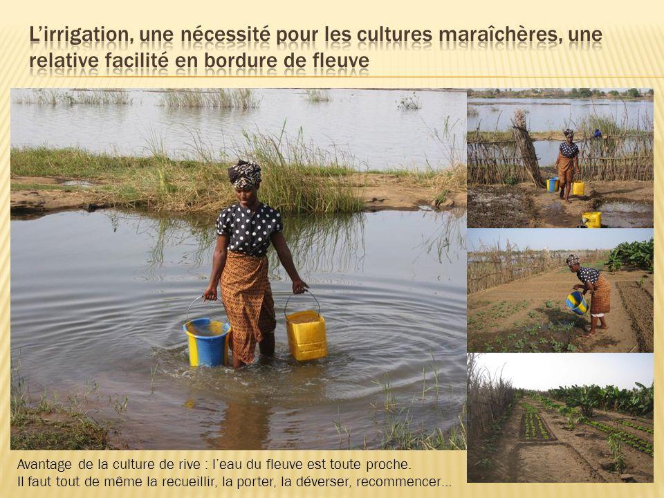 L'irrigation, une nécessité pour les cultures maraîchères, une relative facilité en bordure de fleuve