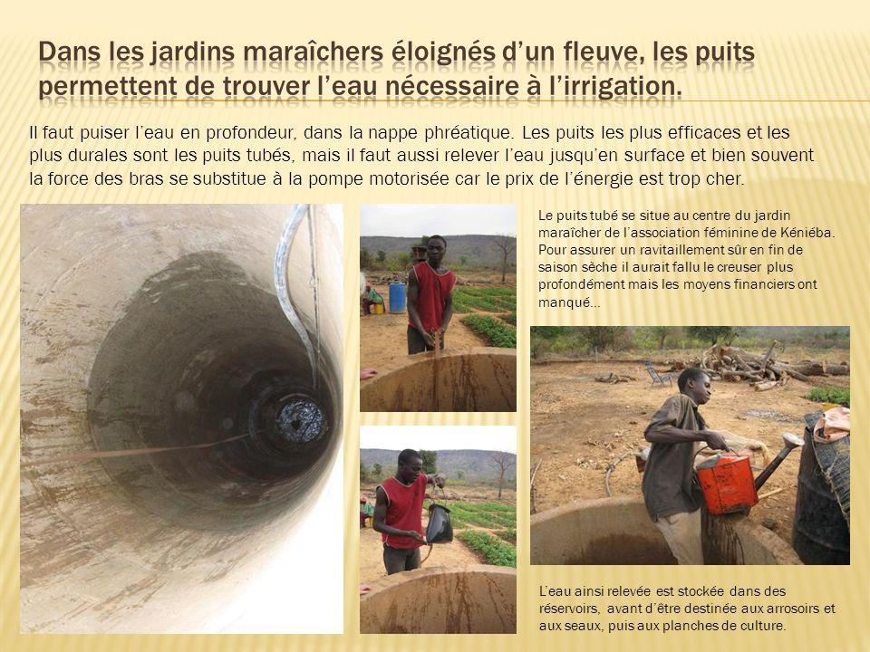 Dans les jardins maraîchers éloignés d'un fleuve, les puits permettent de trouver l'eau nécessaire à l'irrigation.