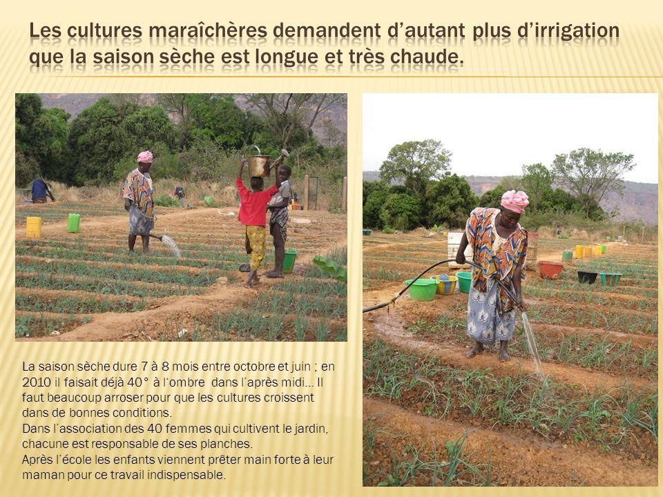 Les cultures maraîchères demandent d'autant plus d'irrigation que la saison sèche est longue et très chaude.