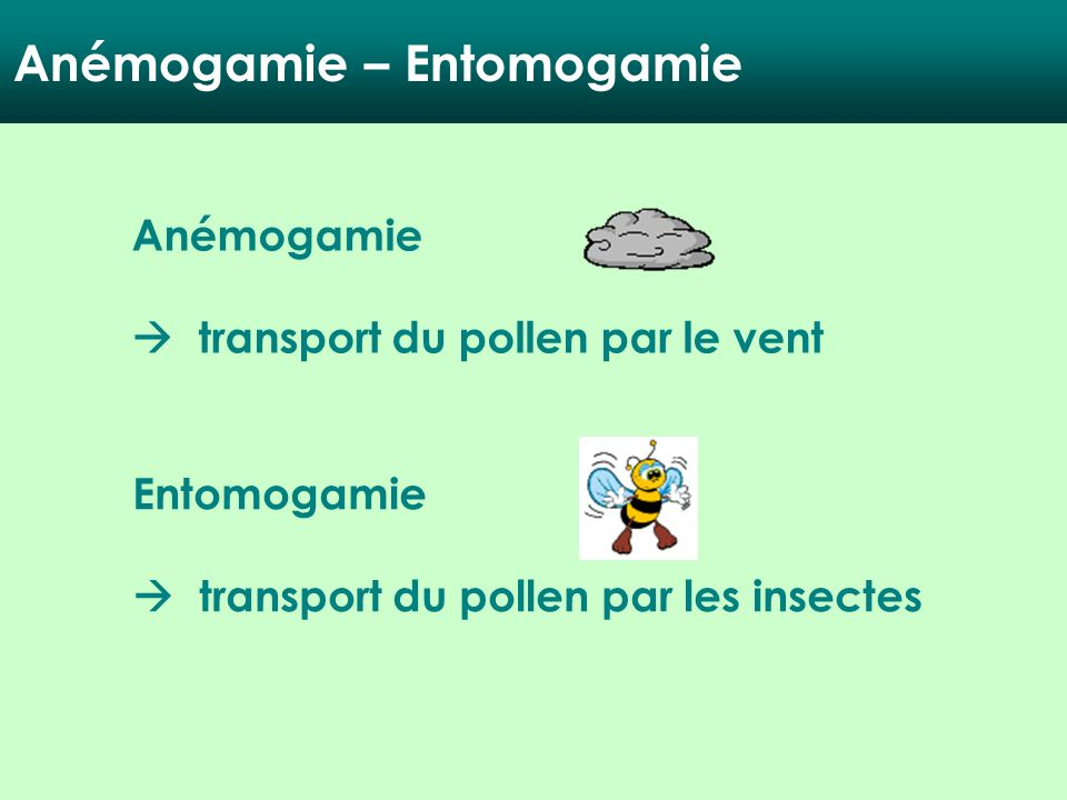 Anémogamie – Entomogamie