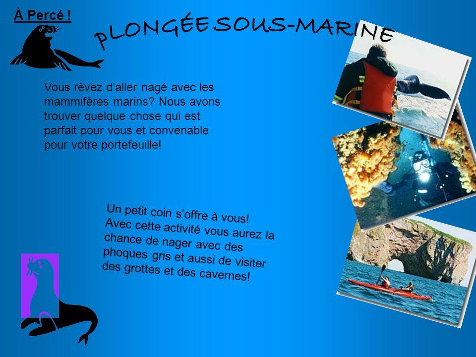 pLONGÉE SOUS-MARINE À Percé !