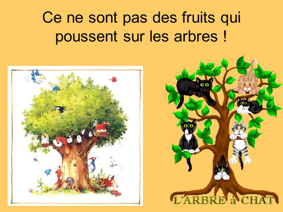 Ce ne sont pas des fruits qui poussent sur les arbres !