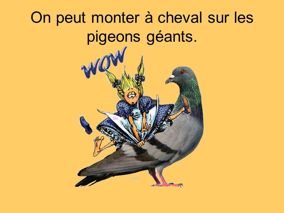 On peut monter à cheval sur les pigeons géants.