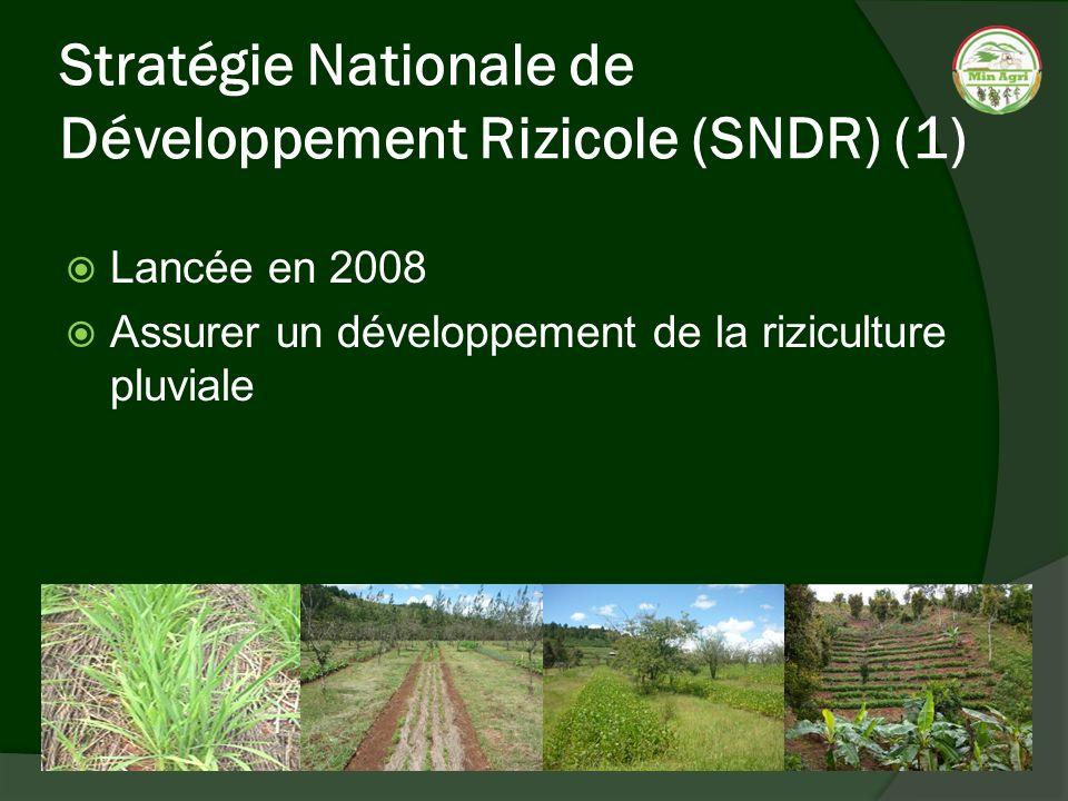 Stratégie Nationale de Développement Rizicole (SNDR) (1)
