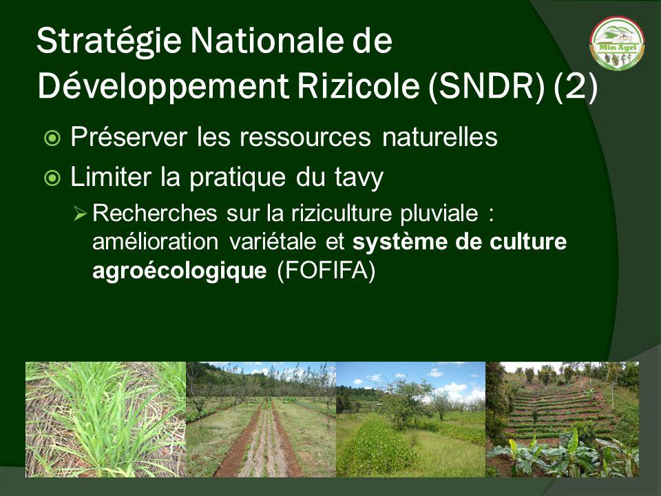 Stratégie Nationale de Développement Rizicole (SNDR) (2)