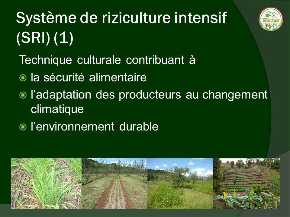 Système de riziculture intensif (SRI) (1)