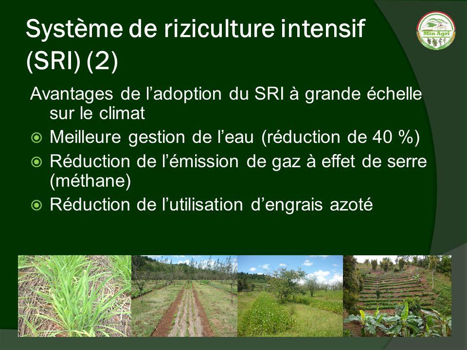 Système de riziculture intensif (SRI) (2)
