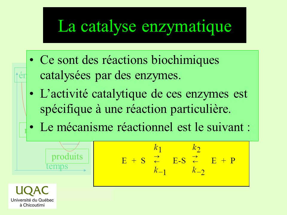 La catalyse enzymatique