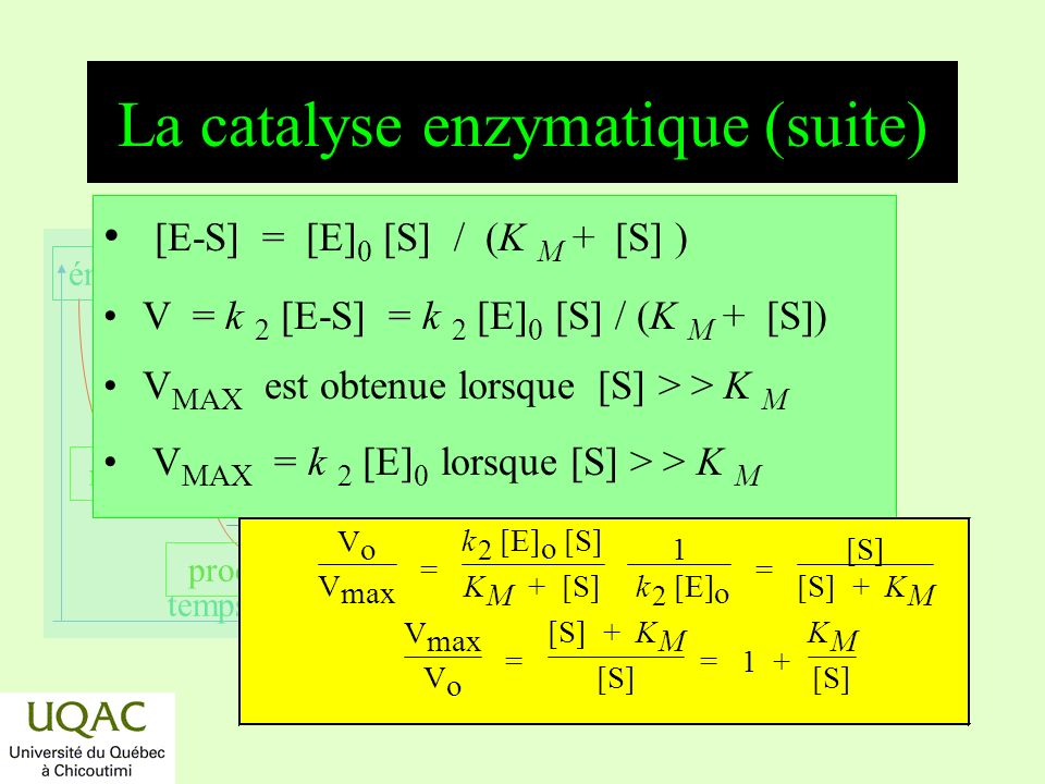 La catalyse enzymatique (suite)