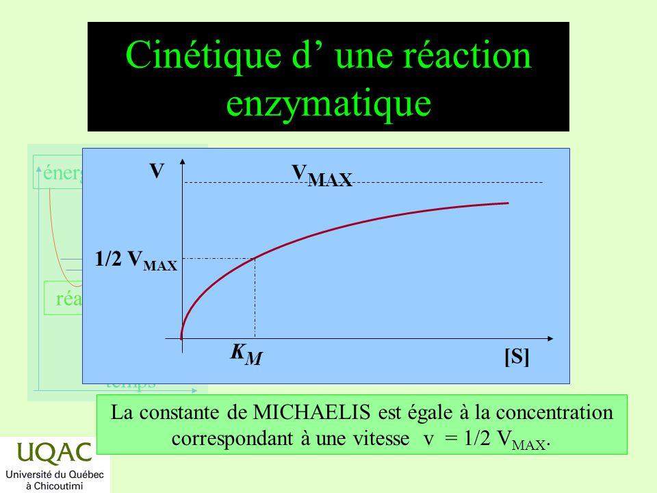 Cinétique d' une réaction enzymatique
