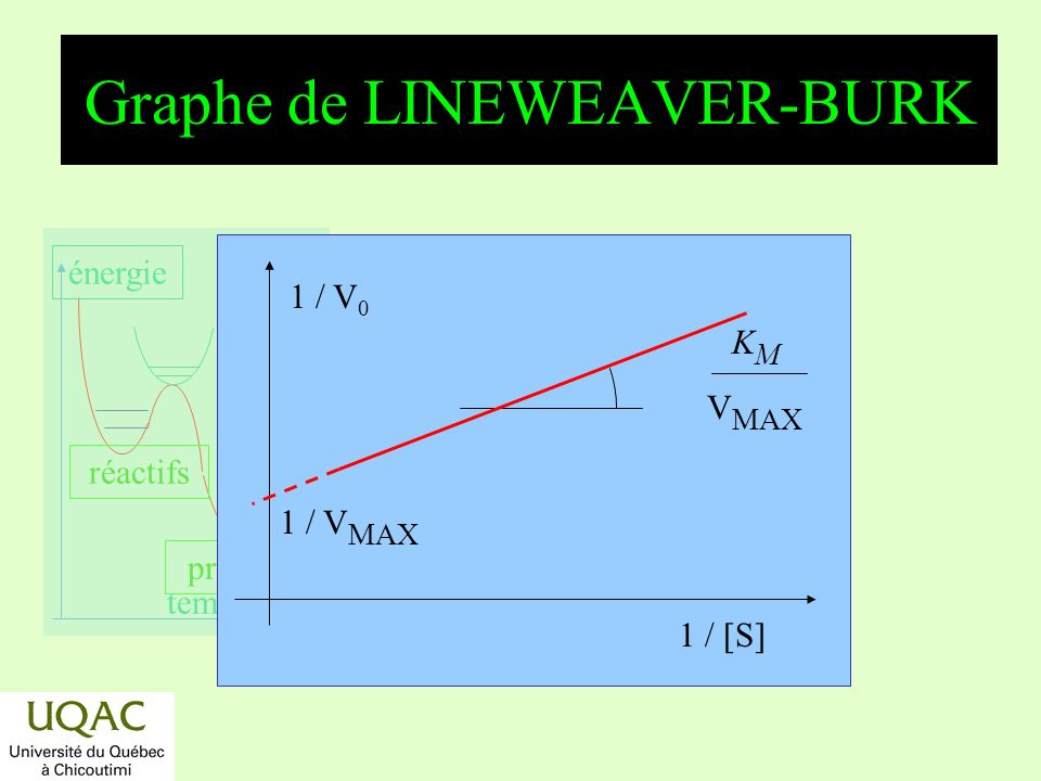 Graphe de LINEWEAVER-BURK
