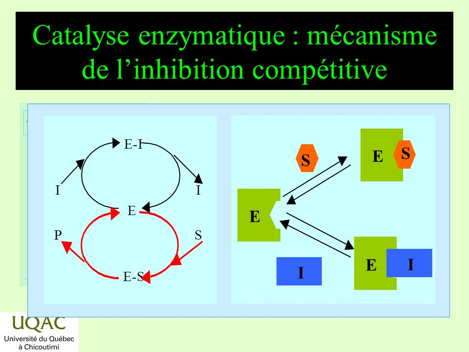 Catalyse enzymatique : mécanisme de l'inhibition compétitive