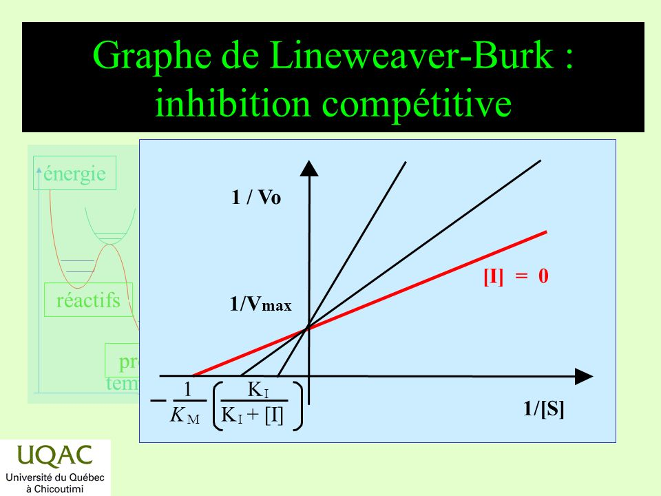 Graphe de Lineweaver-Burk : inhibition compétitive