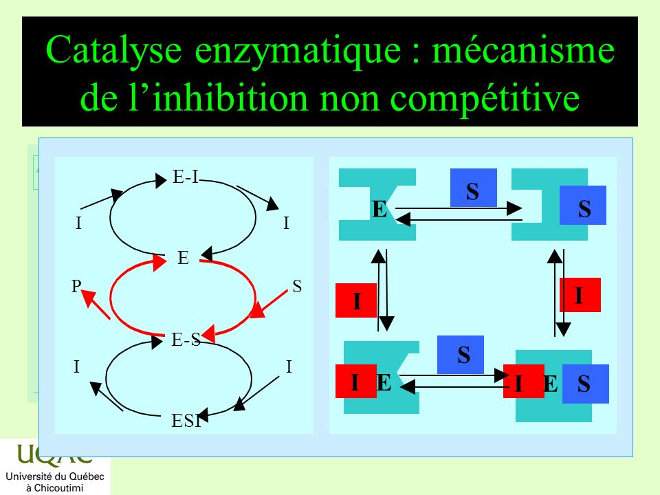 Catalyse enzymatique : mécanisme de l'inhibition non compétitive
