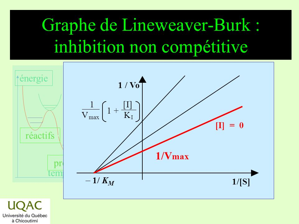 Graphe de Lineweaver-Burk : inhibition non compétitive