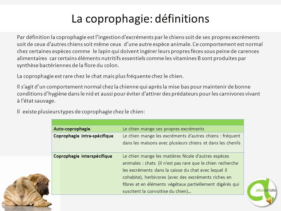 La coprophagie: définitions