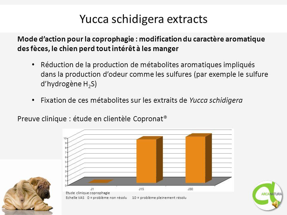 Yucca schidigera extracts