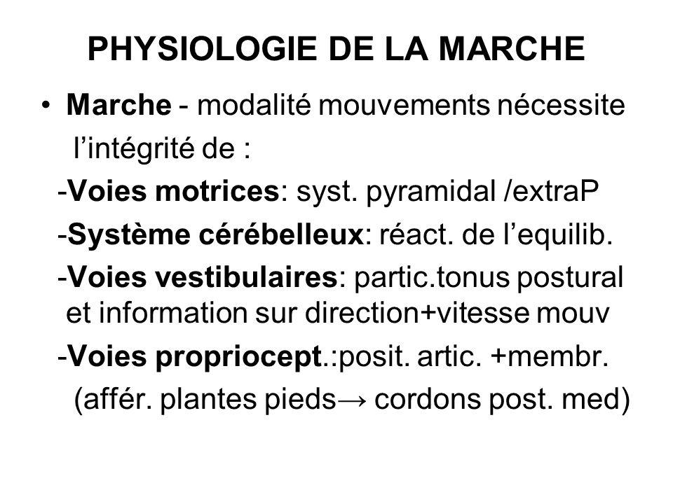 PHYSIOLOGIE DE LA MARCHE
