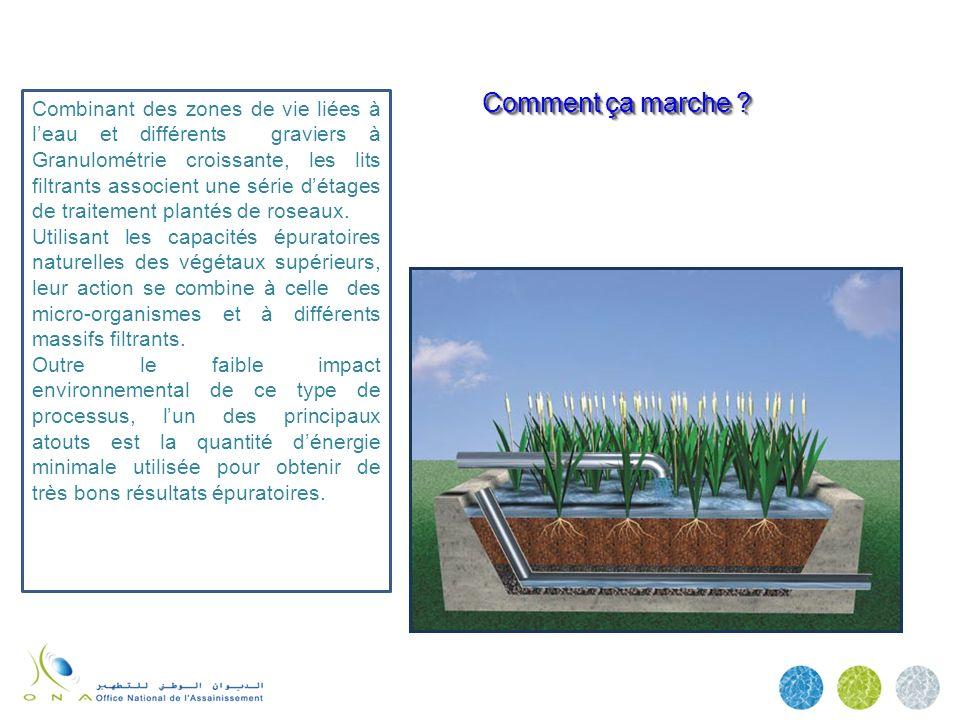 Combinant des zones de vie liées à l'eau et différents graviers à Granulométrie croissante, les lits filtrants associent une série d'étages de traitement plantés de roseaux.