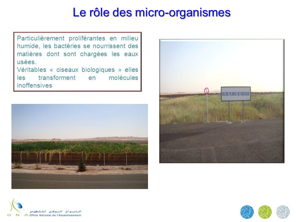 Le rôle des micro-organismes
